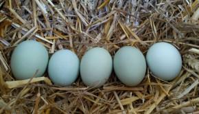 öt tojás
