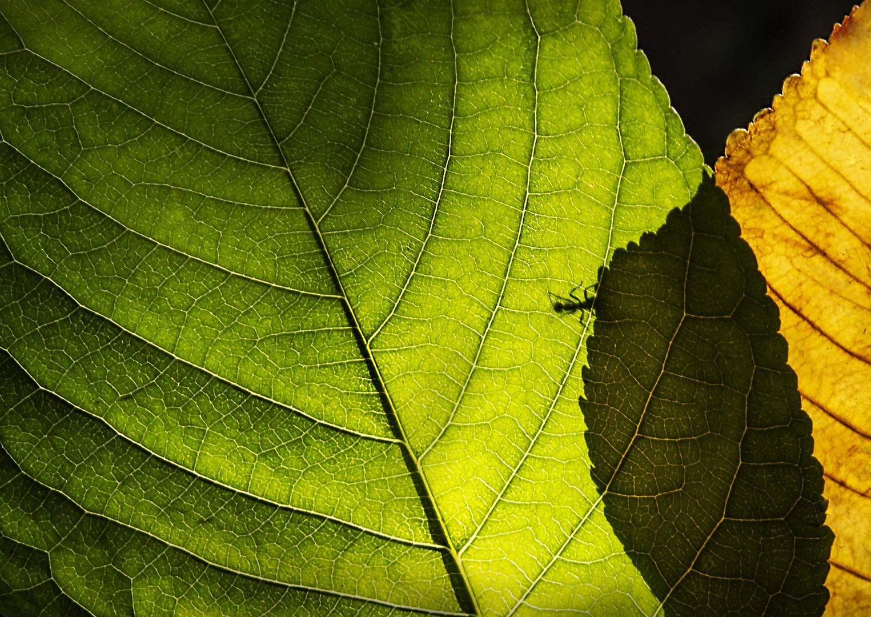 Eifert János: Hangya a levélen / Ant on the leaf (2018)