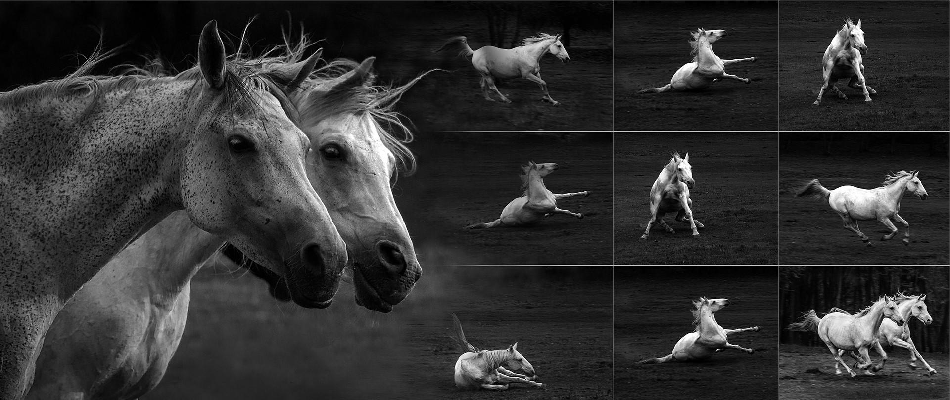 Eifert János: Két dühös ló története / The story of two angry horse 2. (Bocska, 2018) Versio: 2018.12.07. Változat: 2018.12.07.