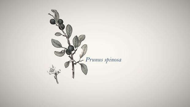 prun5